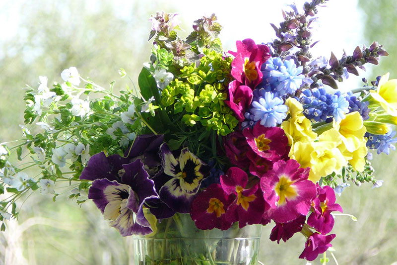 Язык цветов — язык чувств
