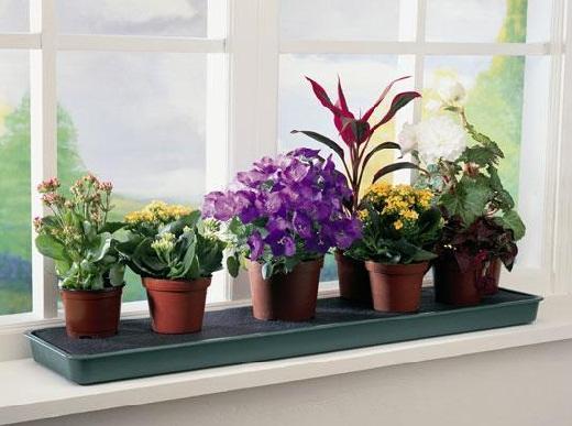 Кухонные комнатные растения. Для каких растений, кухня это идеальное место расположения?