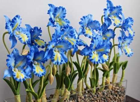 Синюю орхидею селекционерам вывести удалось совсем недавно