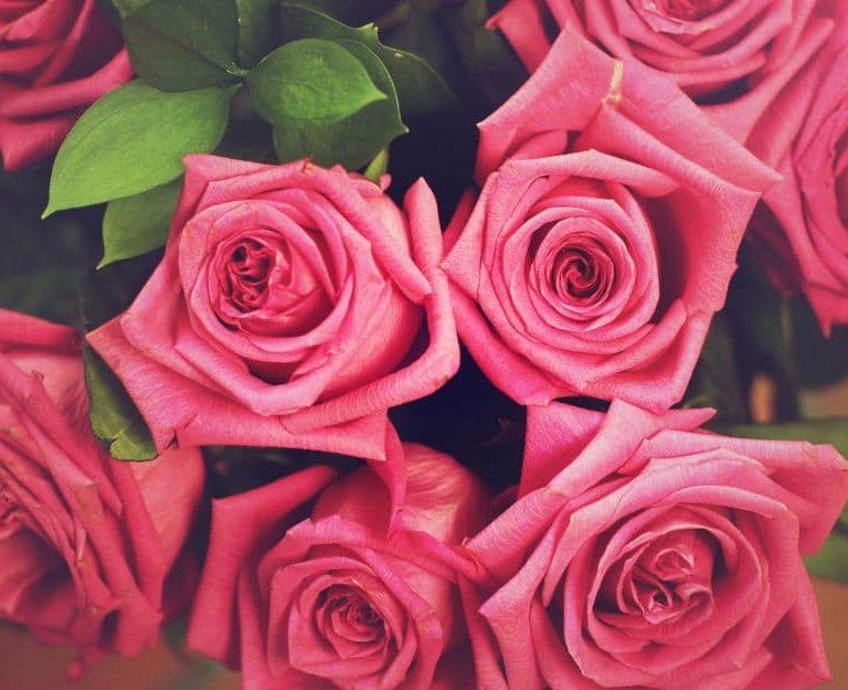 Каково значение очаровательных роз?