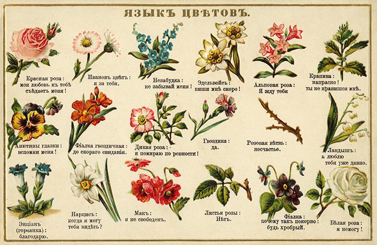 Селам — язык цветов